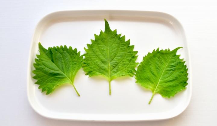 """野菜界のトップクラス!?薬味""""大葉""""のもつ驚くべき栄養素とは"""