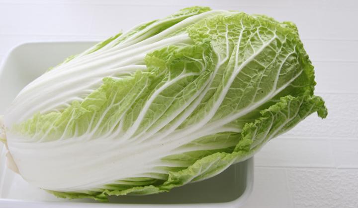 冬の定番野菜の白菜!栄養豊富で低カロリーの優秀野菜