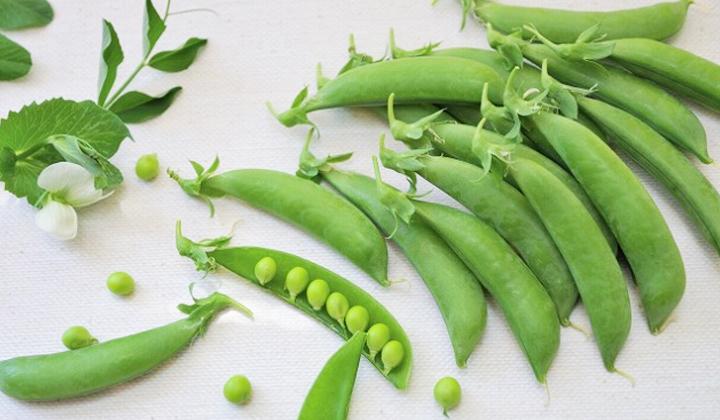 春の味わい「スナップエンドウ」の栄養と嬉しい効能を解説